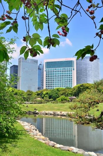 のんびりゆったりお散歩日和。ビルに囲まれた自然豊かな公園「浜離宮恩賜庭園」