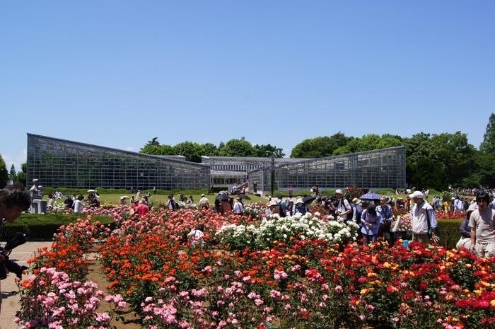 神代植物公園を初めて訪れるなら、春の桜か、秋の紅葉か、春・秋にそれぞれ開催される「バラフェスタ」の時期がおすすめです!
