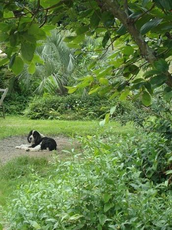 敷地内の大きなプラムの木の下では、オーナーさんの愛犬パウダーくんが、のんびりお昼寝をしています。  ワンちゃん同伴の時は、野外のテーブル席があるので、お散歩途中でも立ち寄れそうですね。