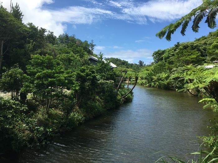 建物の横には大きな池がありまわりを散策できます。 池の中にいる沖縄の魚の珍しい形にびっくりするかも。