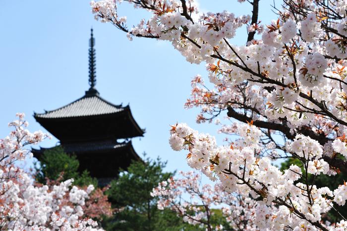 以下では、「桜餅」が美味しい和菓子店の数々を紹介します。  県外に支店がある店や通販を扱う店もありますので、京都へ出かける予定がない方も必見です。記事を参考にして、ぜひ季節ならではの美味しい「桜餅」を存分に味わいましょう。