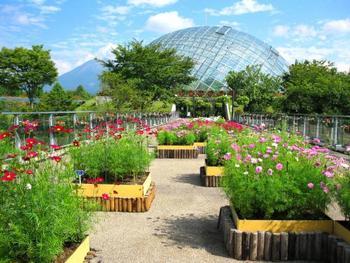 風情あふれる下町や米子市美術館などの観光スポットも多く、なかでも「とっとり花回廊」は、国内初の屋根つきの展望回廊や、フラワードームなど、四季折々の花風景を1年を通じて楽しめる、日本最大級のフラワーパークです。