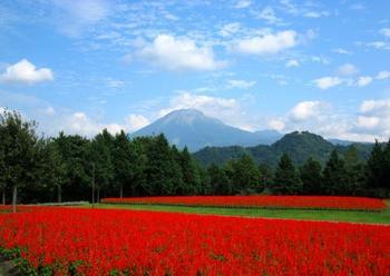 広大で美しい園内からは、伯耆富士とも呼ばれている休火山「大山」の秀麗な姿を望むことができ、絵画のような世界があちこちに展開されています。