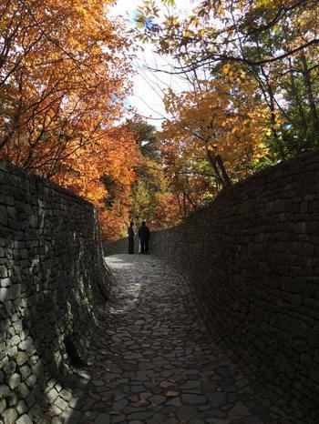 石畳を覆うように広がる赤や黄色の紅葉がとても美しいです。 教会見学をしながら、紅葉狩りも素敵ですね。