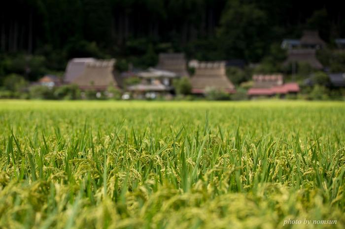 【京都府南丹市美山町の農村風景】