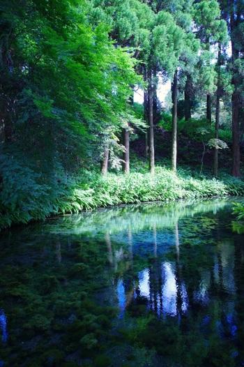 透明で美味しい湧き水は、持ち帰ることもできるそうです。水源巡りの旅をしたくなりますね。
