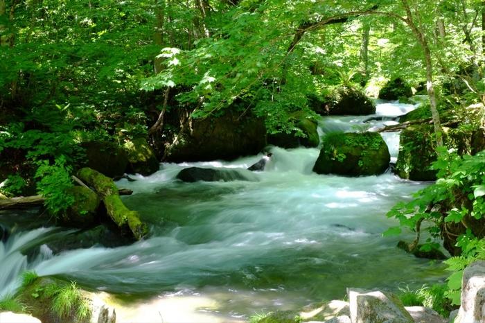 青森県十和田市にある「奥入瀬(おいらせ)渓流」。十和田八幡平国立公園にもなっている奥入瀬渓流の流域には、なんと約300種類もの苔が生息していることから「日本の貴重な苔の森」に認定されました。