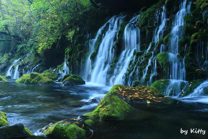 国の天然記念物に指定されている「獅子ヶ鼻湿原」は、秋田県にかほ市・鳥海山麓の北側にあります。およそ26haのこの森には、世界的にも貴重な苔が生息しています。