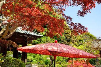 駅から少し離れていますが、ここまで向かう道中の紅葉も楽しめます。定番の観光スポットと違い、比較的静かに紅葉を鑑賞することができます。赤やオレンジの紅葉に、赤い野点傘が映えます。真っ赤に染まった境内で、秋を感じてみてはいかがでしょうか。