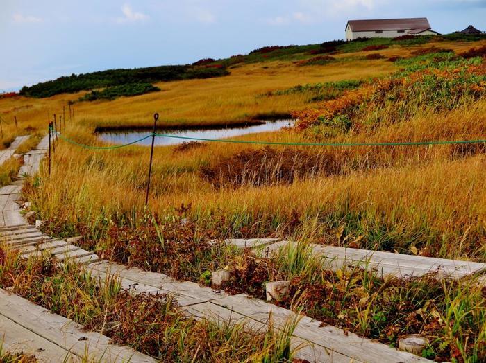 """まるで絵本の中のワンシーンのような山形県の「月山弥陀ヶ原湿原」は、""""標高1500メートルの天空の花の楽園""""とも言われ、夏場には数百種類の高山植物に出会うことができます。"""