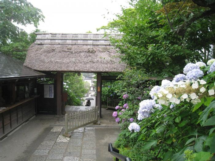 臨済宗円覚寺派の寺院、東慶寺。現在は男性の僧侶が住職をお務めですが、開山から明治までは本山を持たない独立した尼寺でした。梅やあじさいが1年中咲きほこる花の寺でもあります。かつて女性から離婚が難しかった時代には、縁切り寺として知られていました。