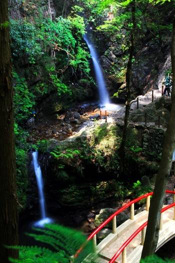 昔は修験道の場、さらにパワースポットとしても知られている埼玉県の「黒山三滝」。その岩場には多数の苔を観察することができます。