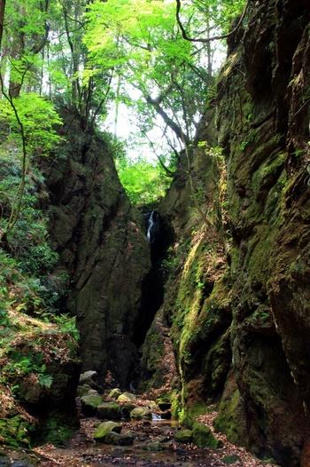 さらに越辺川の源流域へと続く周辺の木々や岩の上にも苔が。