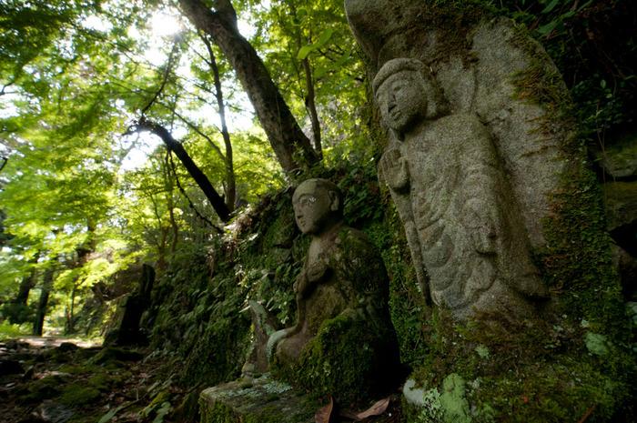 鳳来寺山を登った森の奥に鳳来寺はあります。途中には歴史を感じさせるお地蔵様や仏様が。もちろん木や岩などにも、苔を観察することができます。