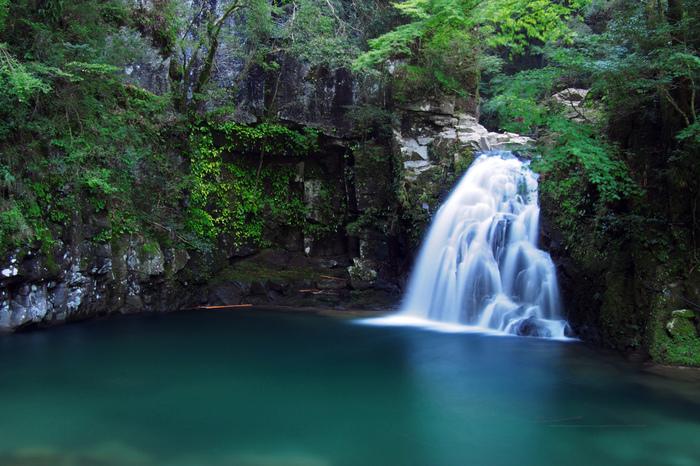 忍者の里としても知られている三重県の深い森の中にある「赤目四十八滝」は、滝はもちろん、美しい苔を目当てに多くの人が訪れます。