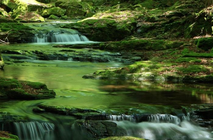 四季折々の美しい景色が楽しむことができ、滝と滝を結ぶ4kmの遊歩道はトレッキングコースとしても人気。希少種こそは少ないものの、森のそこかしこに美しい苔を臨みながら散策をすることができます。