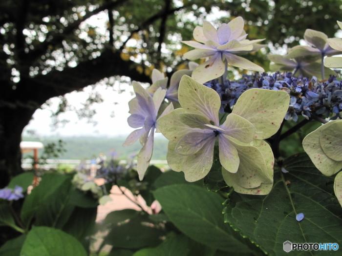 広大な敷地を有する登美のワイナリー。敷地内には色とりどりの花が咲く素敵なお庭があります。