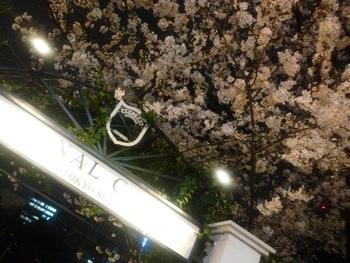 平日は会社帰りの方で混雑するので、日曜の夜が比較的おすすめ。美しい夜桜と都会のネオンがステキです。