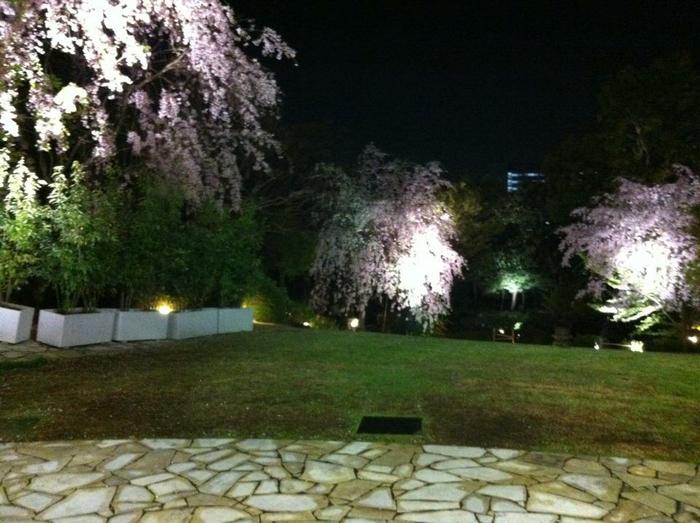 夜になるとライトアップされる桜を愛でながら優雅な時間が過ごせそう。