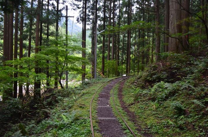 由良川現流域、京都にある「芦生(あしゅう)演習林」。京都大学の芦生研究所として管理されているほど貴重な森です。