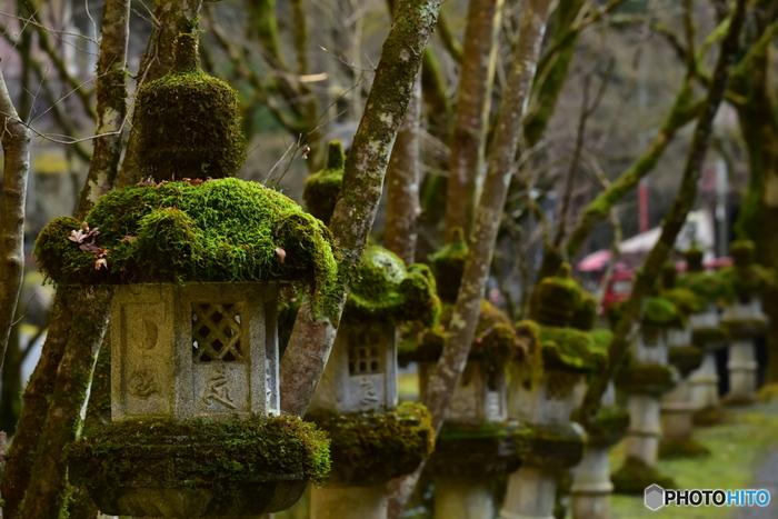 境内だけでなく参道にも美しい苔を目にすることができます。瑠璃寺のような低地ではあまり見ることのできない種類の苔が生息している、珍しい場所なんだそう。