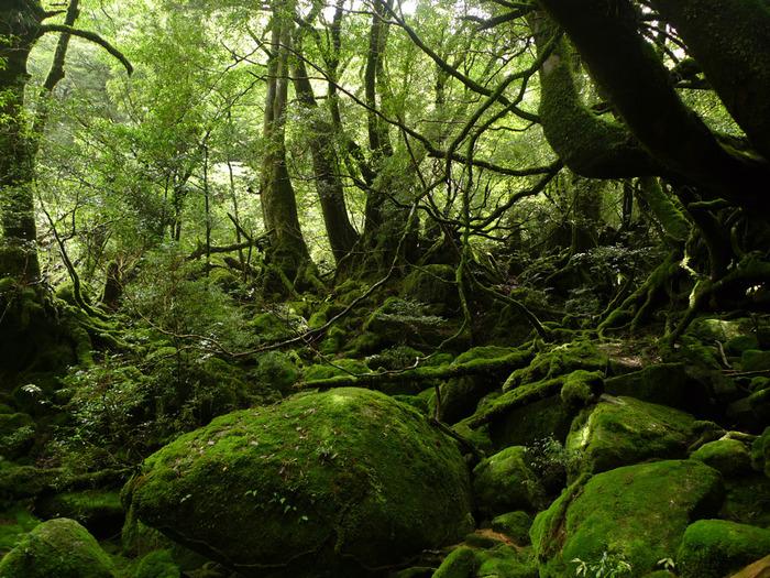 世界遺産に登録されている屋久島。幻想的な風景は、あの「もののけ姫」のモデルにもなったほどです。