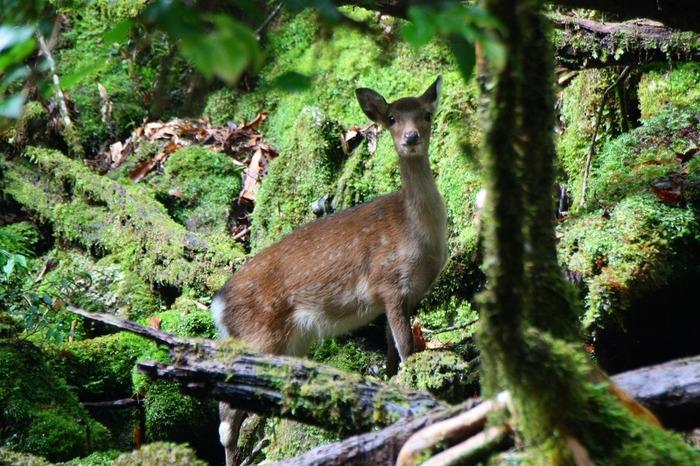 希少種の苔と共に多くの動物たちも生息しています。
