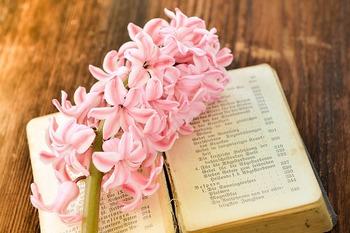 カラーバリエーションの多いヒヤシンスも春の代表的なお花です。春らしく淡いピンクのヒヤシンスはいかが?