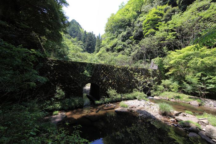 谷の広範囲を苔が覆っているため、昔から苔の研究者たちが良く訪れていたそうです。