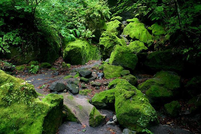 岩盤の一部崩落により、内部に入ることは出来なくなっていますが、展望台から美しい苔を眺めることが出来ます。
