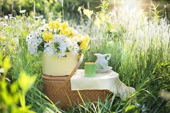 暖かい日にはお弁当を持ってピクニックに♪春らしく自然に触れ合い、ふきのとうやツクシ、ヨモギなど野草をちょっぴり摘んだりしてみても。