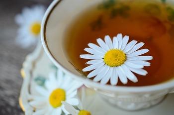 春におすすめのハーブティーはカモミール。カモミールは身体を温め、安眠効果もあります。ジャーマンカモミールの方が苦みも少なく飲みやすいようですよ。