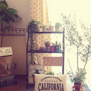 オリーブが最も好むのが日光です。 つまり、耐陰性はあまりないのでお部屋の中でも出来るだけ日当たりの良い場所に置いてあげて下さい。