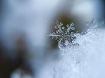 【凍蝶(いてちょう)】幾日も止まったままの冬の蝶が、死んだかと思いきやふれると舞い上がったり、生きているかと思えば凍っていたりする様子をいいます。/【御降(おさがり)】元日に降る雨雪のこと。3が日に降る雨雪に言うという説も。/【雪】や【雪見】も1月の季語。