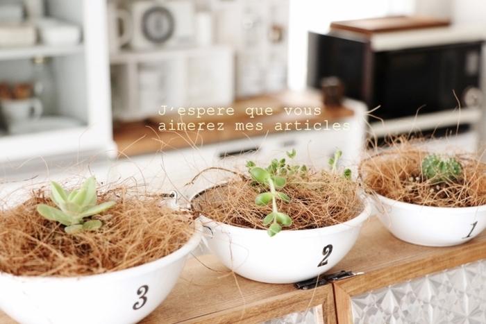 小さな多肉植物をちょこんと植えたい時におすすめなのが、ヤシの繊維で出来た「ココヤシファイバー」。土の表面にかぶせると、それだけでナチュラルな雰囲気に仕上がります♪ホーローのカップともよく合いますね!