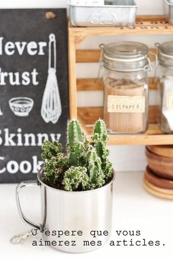 少し成長したり、脇芽が増えたりしたら、もう少し大きい物に植え替えてみましょう。そんな時にマグカップはぴったりのサイズ♪メタリックな素材のカップを選ぶと、サボテンの雰囲気もなんだかシャープになります。