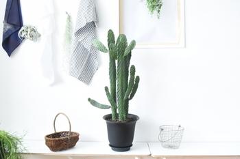 株や葉っぱが増えるとこんなにボリューミーに!大きな鉢に植え替えて、床置きにするのもオススメです☆墨烏帽子は繁殖力が強いため、伸びた部分をカットすると脇から小さな新芽が顔を出します。また、カットしたものを挿し木にして育てることも出来ますよ。
