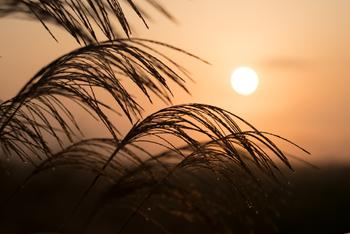 【野分(のわき)】秋の疾風や暴風のこと。野も草も吹き分ける風という意味で、台風のこととも言われています。/【夜長(よなが)】実際は冬の方が夜は長いのですが、実感としては夜長を感じやすいのが秋のため、秋の季語とされています。