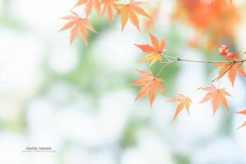 【薄紅葉】もみじの紅葉がまだ赤く染まり切らずに、薄い色をしているようすのことをいいます。【紅葉】も10月の季語。/【行秋(ゆくあき)】秋の過ぎ去ろうとするさま。