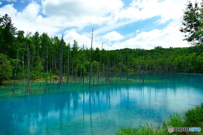 「青い池」(北海道上川郡美瑛町)/火山砂防工事のため、えん堤を造ったところ、そこに水がたまり偶発的にできた池。まばゆいばかりのコバルトブルーにうっとり♪季節や天候によっては色が違いますので、前もって要チェック。ベストシーズンは、5月中旬から6月下旬頃だそうです。見られたらラッキーですね。
