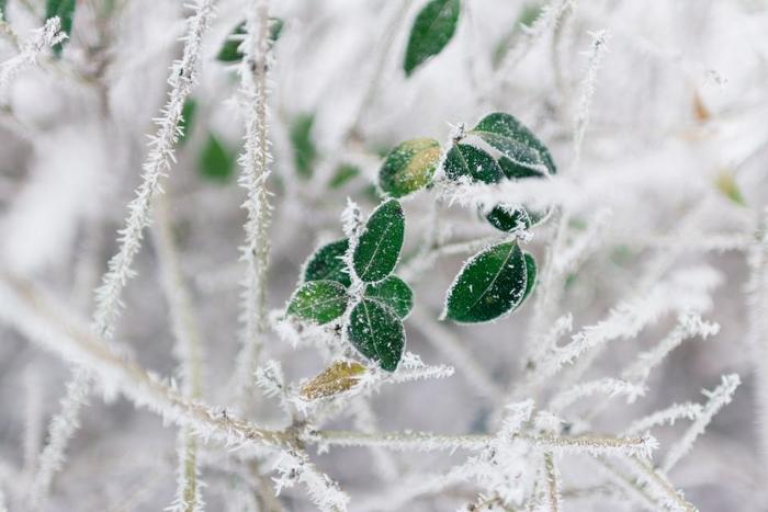 【冴返る(さえかえる)】光や音などがくっきりと澄むさま。また、立春を過ぎてから鋭い寒さがぶり返すことをいいます。同じ意味で【凍返る(いてかえる)】という季語も。残る寒さを表す季語として、他に【余寒(よかん)】【春寒(はるさむ)】などもあります。