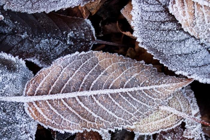【息白し(いきしろし)】朝夕などに、冷気にさらされた息が白く見えること。/【冬枯(ふゆがれ)】冬が深まり、草木が枯れ果てたようす。/【山眠る】冬枯れて山の彩りも失われ、深い眠りについているかのようなさま。【山笑ふ】と対のような季語ですね。