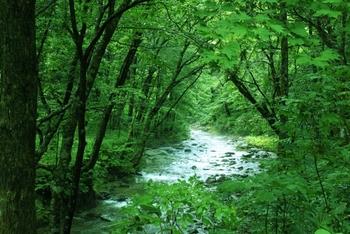 暖かくなってきたら、自然の中を散策するのもいいですね。爽やかな風の音、小川のせせらぎ、小鳥のさえずり……。目を閉じて大地の息吹を感じましょう。