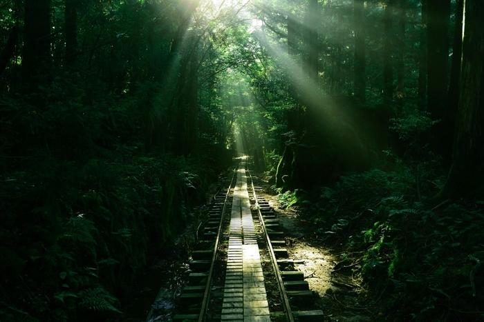 こんな幻想的な顔も覗かせてくれる屋久杉の森。 本当に魅力的な場所です。