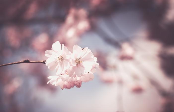 """春は""""出会いの季節""""なんてよく耳にしますよね。素敵な縁があるといいな…♪と期待に胸を膨らませている方もいらっしゃるのではないでしょうか?"""