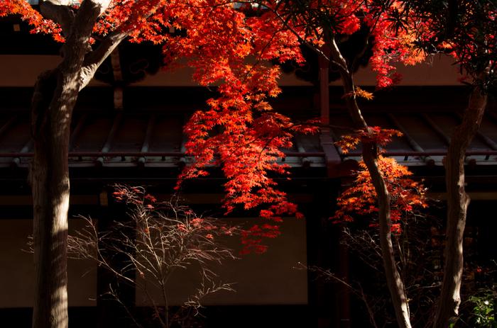 春には桜。秋には紅葉がキレイな場所です。都会のど真ん中とは思えない静寂な空間です。