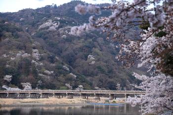 【春の渡月橋の景色】