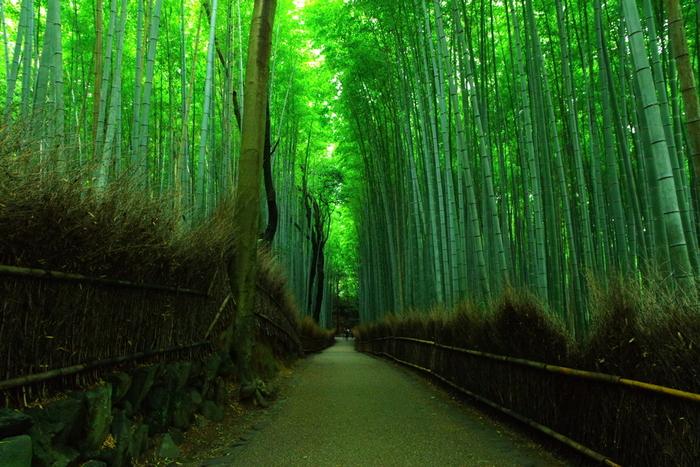 【竹林が続く道は、木漏れ日美しく、清涼感いっぱい。幻想的で透明感ある嵯峨野の風景を満喫できます。】