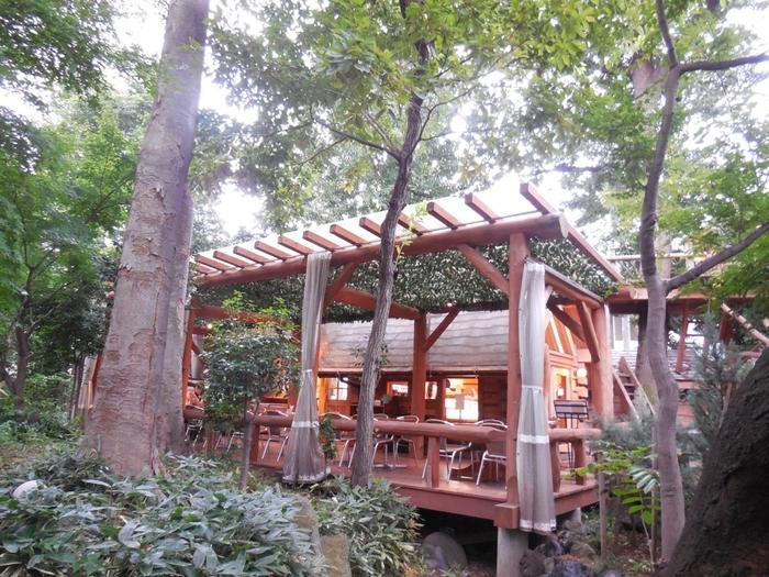 高い木々にかこまれたログハウスの建物は、鎌倉の有名店「パティスリー雪乃下」の世田谷店。 右奥に見える展望台やはしごは、小さい時に作った秘密基地を思い出させます。 緑に溶け込んだウッドデッキに座ると、まるで別世界。