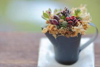 多肉植物の種類は本当に幅広く、知れば知るほど楽しさが広がります。飾り方にもいろいろなスタイルがあるので、まずはお気に入りの植物を見つけて、自分流にアレンジしてみて下さいね!